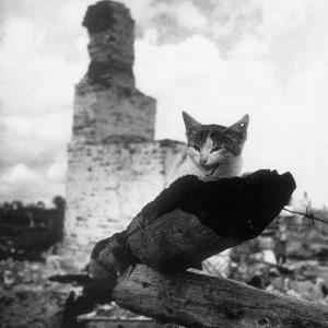 На пепелище. Город Жиздра. Кошка с простреленным ухом. 1943 год. Фото: Михаил Савин