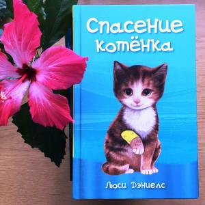 О кошках, котах и котятах. Фото 3
